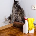 Tips to Preventing and Removing Mold