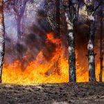 How Wildfires Pose a Real Danger to Homes