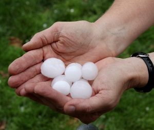 Large hailstones held in two hands.