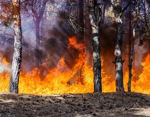 Forest being damaged by summer wildfire.