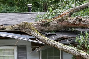 An oak tree damaging the roof of a house, indicating the need to report a homeowners insurance claim