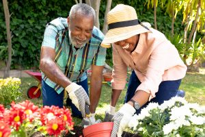 A senior couple planting a garden, depicting a way to enjoy a social-distancing summer