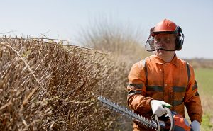 A landscaper dressed in orange protective gear using a hedge trimmer to cut dried up hedges in the heat