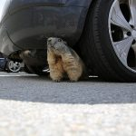 Preventing Rodents from Damaging Your Vehicle