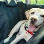 Safety Tips While Driving with Pets