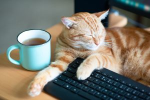 A ginger cat laying on top of a desk with it's arms draped over a keyboard next to a cup of coffee, meant to exemplify how to pet-proof your home.